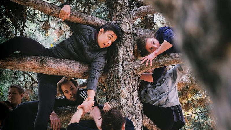 People wrapped around the trunk and branches of a pine tree.